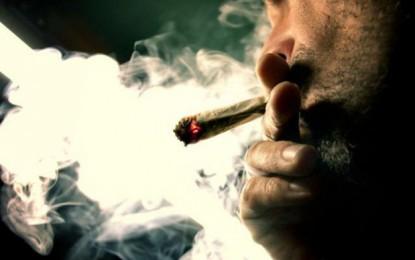 Kuriozitet: Tete gjera qe nuk dini per marijuanen