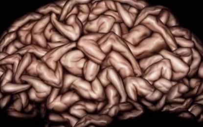 Shkenca: 8 fakte të mahnitshme rreth trurit njerëzor
