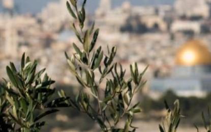 Mrekullia e Israsë dhe Miraxhit