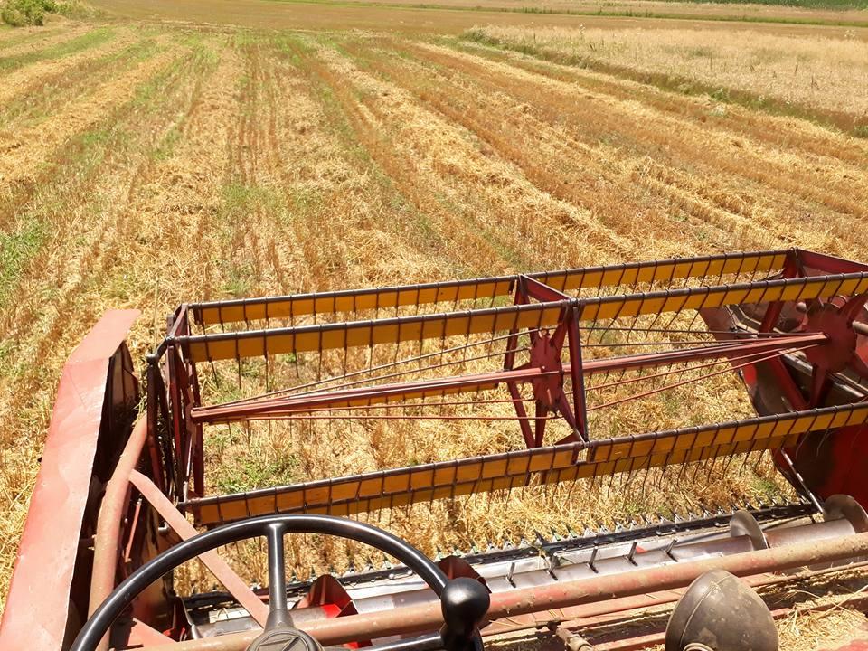 Bujanoc: Vazhdojnë korrje-shirjet, këtë vit më pak rendimente (Video)