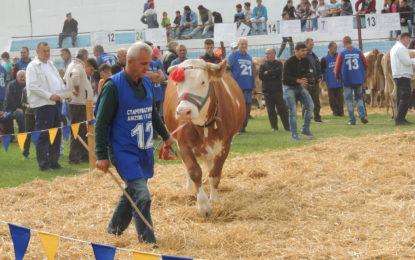 Bujanoc:Mbahet ekspozita e lopëve, Zenel Halili nga Tërnoci  fituesi i  çmimit të përgjithshëm