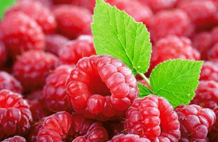 Lëngu i mjedrave ruan mëlçinë, çaji shëron lukthin